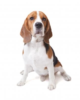 Canine Chiropratic
